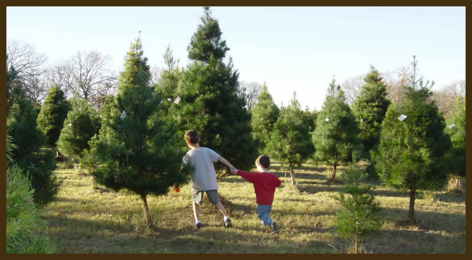 got questions or thinking about starting a christmas tree farm - How To Start A Christmas Tree Farm